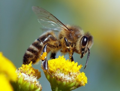 The buzz about honeybee venom: Promising early research to treat breast cancer